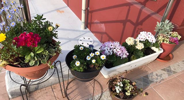 入居者様が育てた花